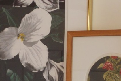 4 framed floral prints in varying sizes with wood and shiny brass frames with white and cream matts.
