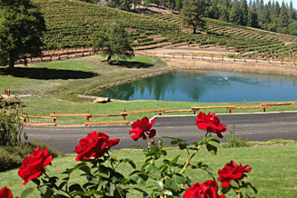 Panoramic view of the pond with the vineyards in the background.