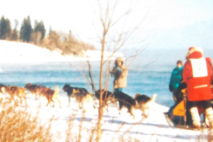 A dog team and a musher along the shore