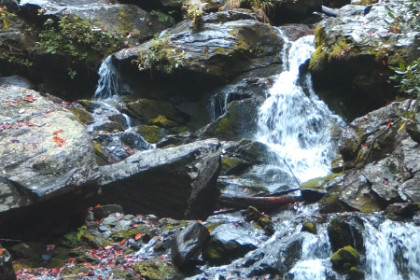 Series of waterfalls cascading over moss-covered boulders surrounded by forest and rhododendron