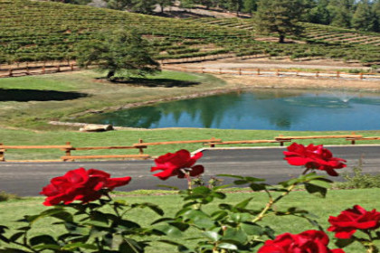 Hillside view of grape vines with large pond in front.