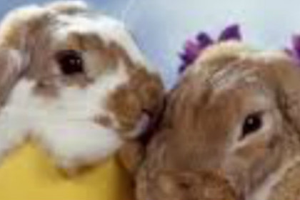 heads of two bunnies the one on the left is white and light brown and the one on the right is light brown. their heads are tilted together and the are standing in yellow and pink easter eggs