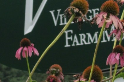 Landis Valley Village Farm Museum printed in white on a dark green background sign with pink echinachia flowers blooming in the front.