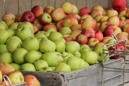 Displays of apples with colors of green and rosy red/yellow in bins outside the Kauffman fruit market.